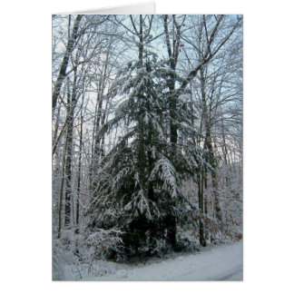 Snow Covered Pinetree Card