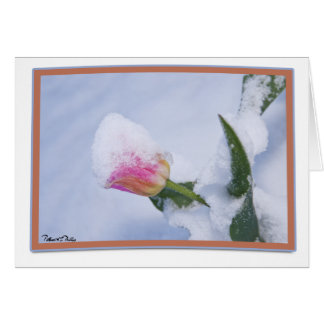 Snow Covered Pink Tulip Card