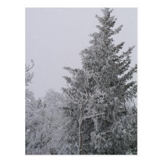 Snow Covered Postcard