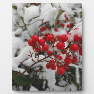 snow covered red berries plaque