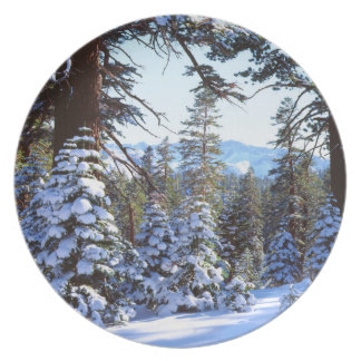 Snow-covered Red Fir trees in the High Sierra 2 Plate
