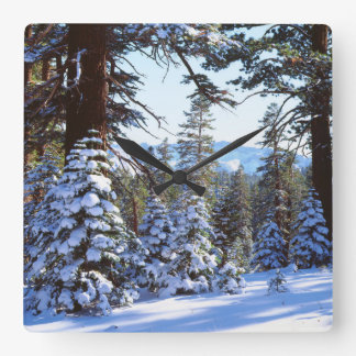 Snow-covered Red Fir trees in the High Sierra 2 Square Wall Clock