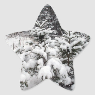 Snow Covered Small PineTrees Star Sticker