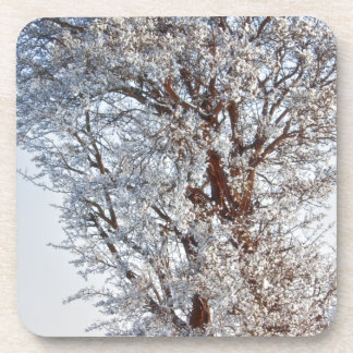 Snow covered tree beverage coaster
