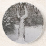 Snow Covered Tree In Epping Forest Beverage Coasters