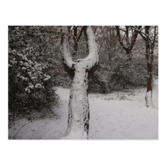 Snow Covered Tree In Epping Forest Postcards