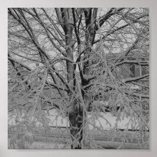 Snow Covered Tree Print
