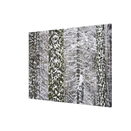 Snow covered tree trunks in Yosemite valley - Canvas Print