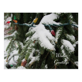 Snow Covered Trees and Lights Postcard