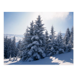 Snow-covered trees and mountains postcard