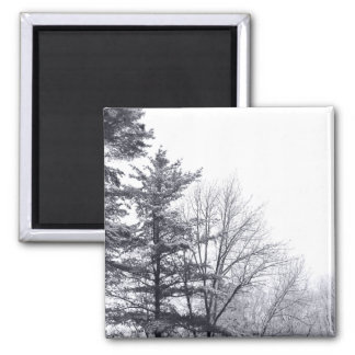 Snow-covered Trees: Horizontal 2 Inch Square Magnet