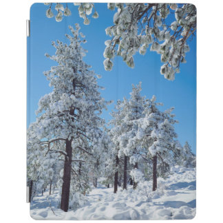 Snow-covered trees in the Laguna Mountains iPad Smart Cover