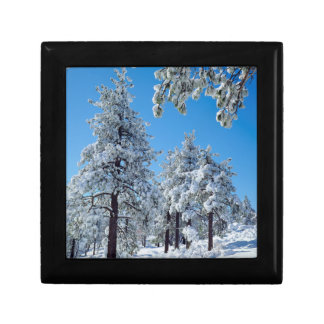 Snow-covered trees in the Laguna Mountains Jewelry Box