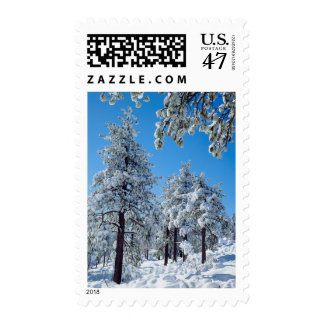 Snow-covered trees in the Laguna Mountains Stamp