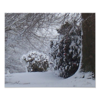 Snow covered trees photo print