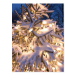 snow covered trees post card