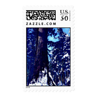 Snow Covered Trees Postage