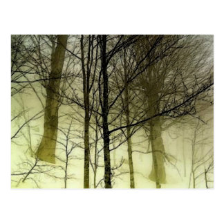Snow Covered Trees Postcard