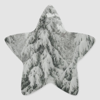 Snow covered trees star sticker