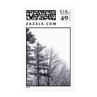 Snow-covered Trees: Vertical – Medium Postage