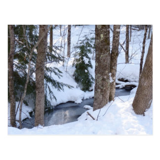 Snow Covered Woods Postcards
