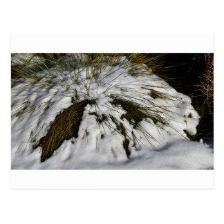 SNOW CRADLE MOUNTAIN TASMANIA AUSTRALIA POSTCARD