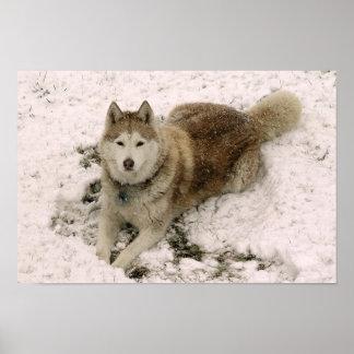 Snow Dog 2 Poster
