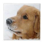 Snow Dog Golden Retriever Ceramic Tiles