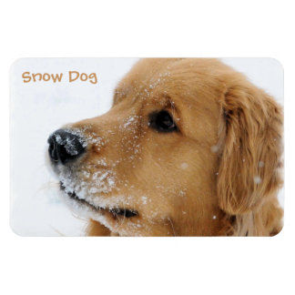 Snow Dog Golden Retriever Rectangular Photo Magnet