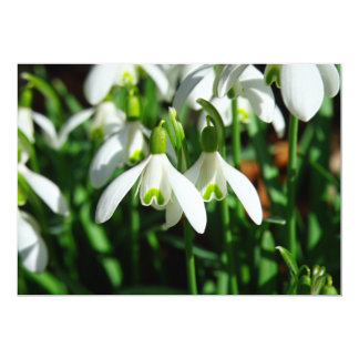 Snow Drops - Winter Blooming Bulb Flowers Card