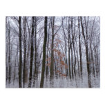 Snow Dusted Forest Winter Landscape Photography Postcard