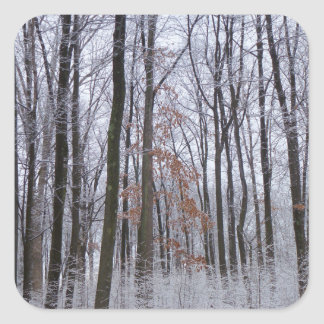 Snow Dusted Forest Winter Landscape Photography Square Sticker