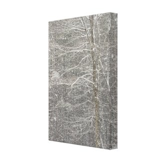 Snow Falling Canvas Print