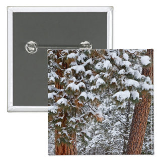 Snow fills the boughs of ponderosa pine trees button