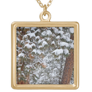 Snow fills the boughs of ponderosa pine trees gold plated necklace