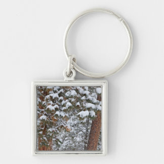 Snow fills the boughs of ponderosa pine trees keychain