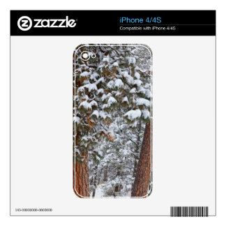 Snow fills the boughs of ponderosa pine trees iPhone 4S decal