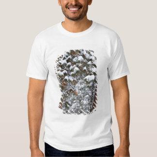 Snow fills the boughs of ponderosa pine trees t-shirt