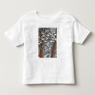 Snow fills the boughs of ponderosa pine trees tee shirt