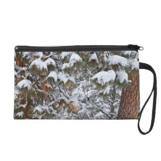 Snow fills the boughs of ponderosa pine trees wristlet