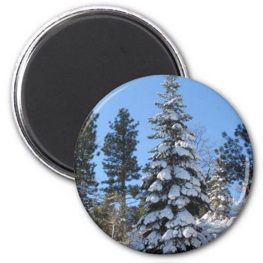 Snow Fir 2 Inch Round Magnet