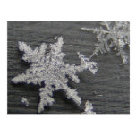Snow Flake 45 ~ postcard