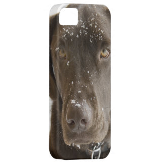 Snow Flake Covered Chocolate Lab Photo Close Up iPhone SE/5/5s Case