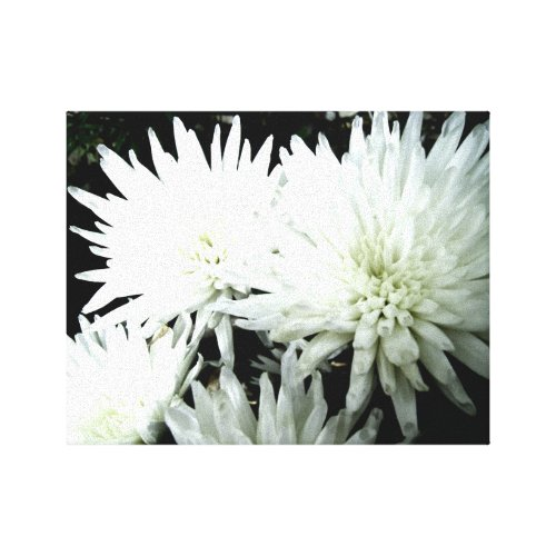Snow Flower Black and White Chrysanthemum Canvas