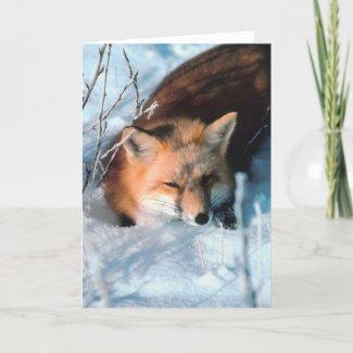 Snow Fox Greeting Cards