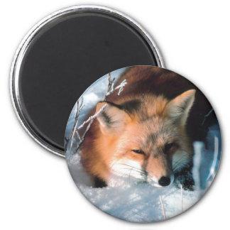 Snow Fox Fridge Magnets