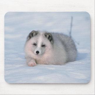 Snow Fox Mousepads