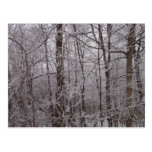 Snow Frosted New England Trees Postcard