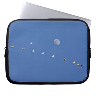 Snow geese and Canadian geese take flight at Computer Sleeve
