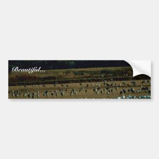 Snow Geese and Sandhill Cranes Car Bumper Sticker